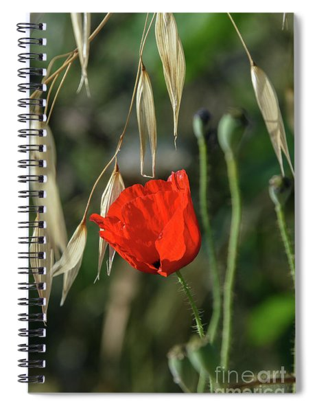 Spiral Notebook featuring the photograph Approaching Summer Signs by Arik Baltinester