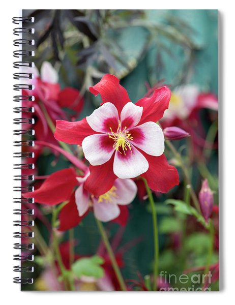 Aquilegia Swan Red And White Flower Spiral Notebook