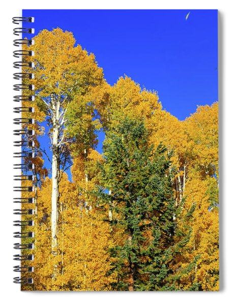 Arizona Aspens And Blowing Leaves Spiral Notebook