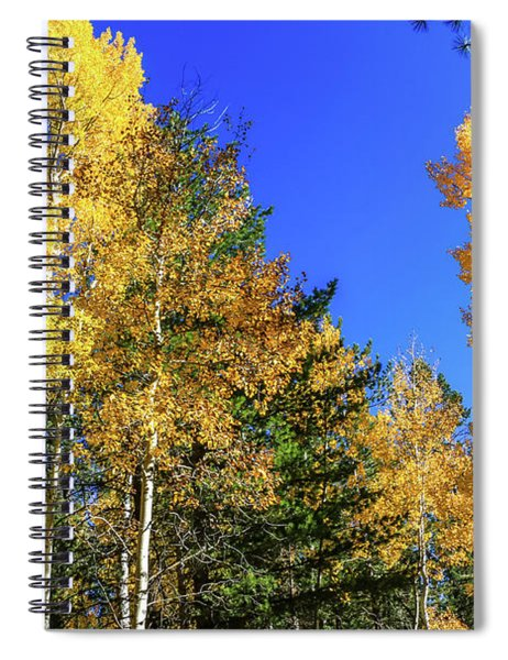 Arizona Aspens In Fall 1 Spiral Notebook