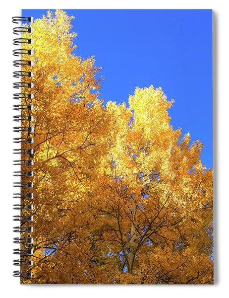 Arizona Aspens In Fall 2 Spiral Notebook