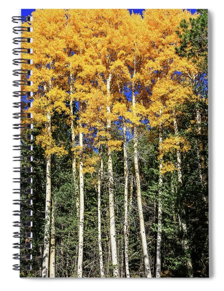 Arizona Aspens In Fall 3 Spiral Notebook