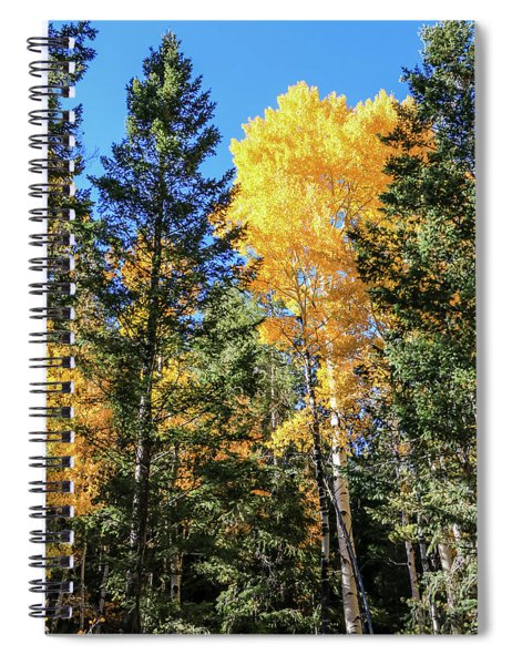 Arizona Aspens In Fall 5 Spiral Notebook