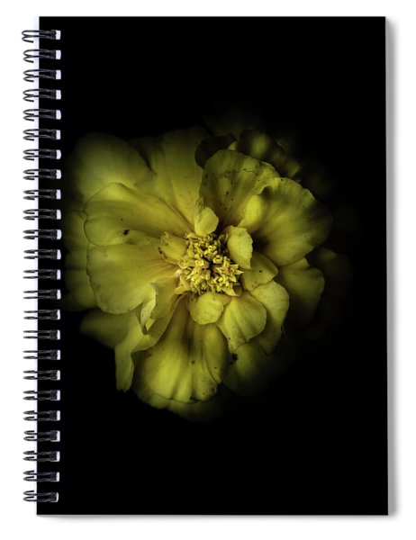 Backyard Flowers 41 Color Version Spiral Notebook