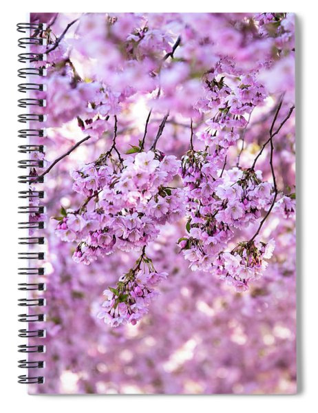 Cherry Blossom Flowers Spiral Notebook