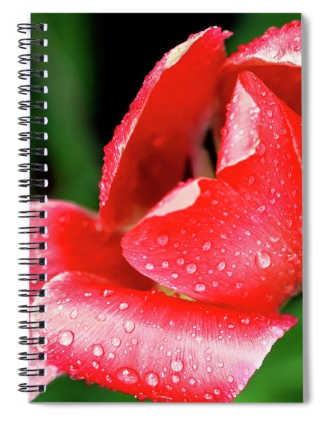 Spiral Notebook featuring the photograph After The Storm by Emily Johnson