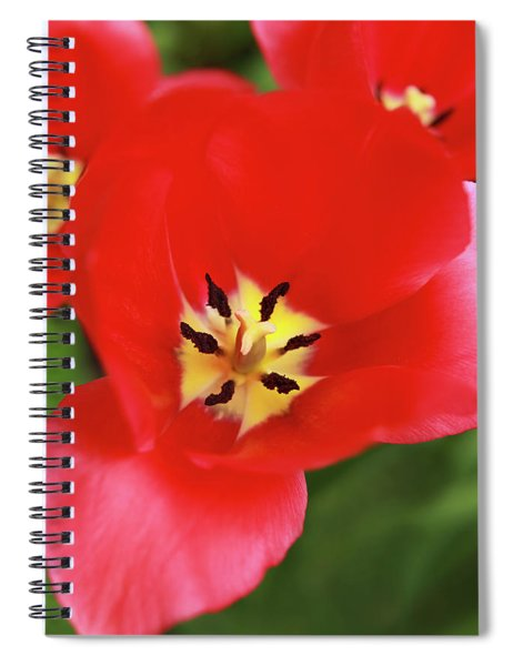 Spiral Notebook featuring the photograph Rouge Bloom by Emily Johnson