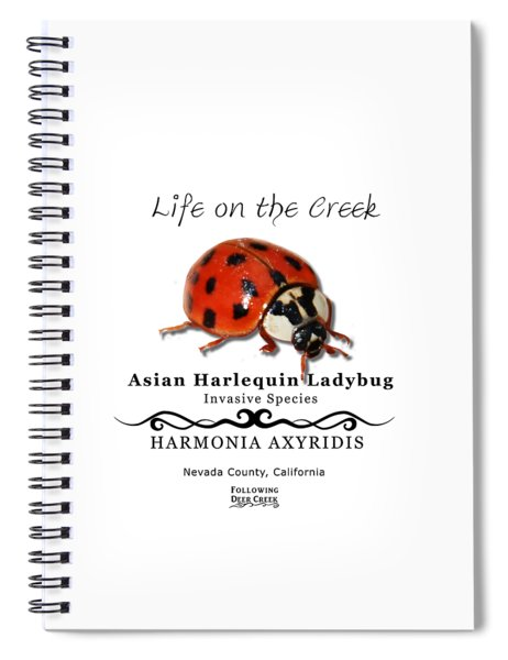 Asian Harlequin Ladybug Spiral Notebook