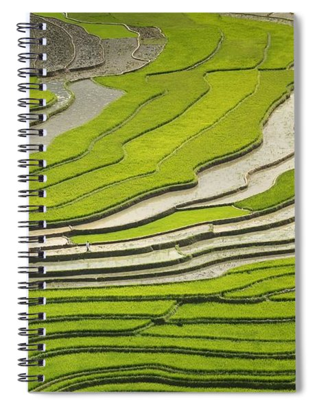 Asian Rice Field Spiral Notebook