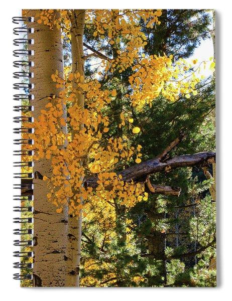 Aspen Tree Close Spiral Notebook