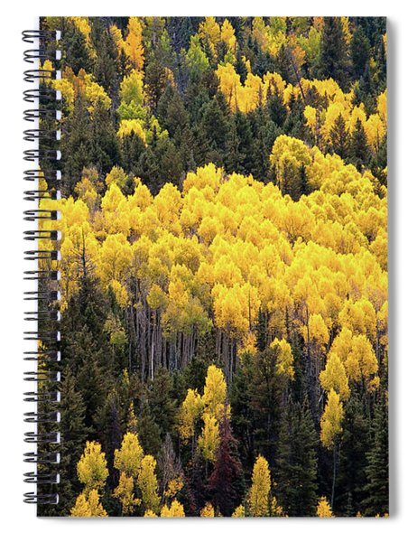 Aspens And Pines Spiral Notebook