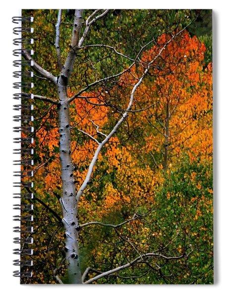 Aspens In Orange Spiral Notebook