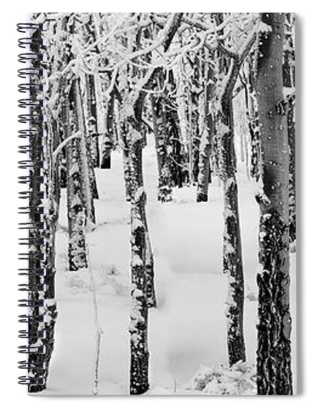 Aspens In Winter Spiral Notebook