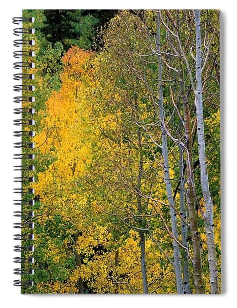 Aspens In Yellow Spiral Notebook
