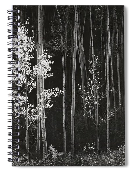 Aspens Northern New Mexico Spiral Notebook