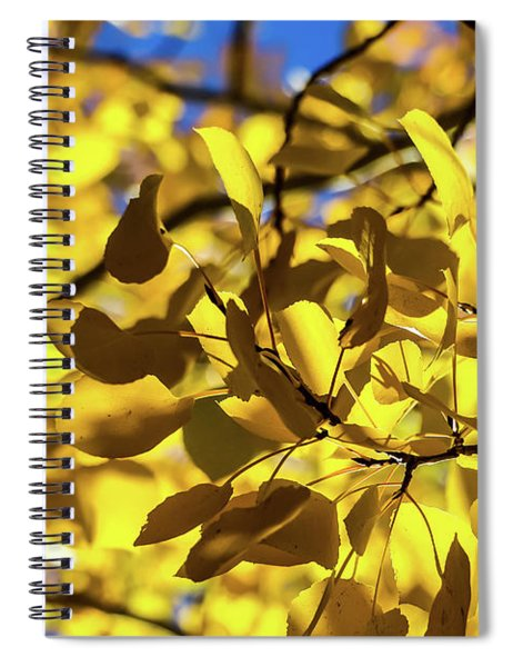 Aspens Up Close Spiral Notebook