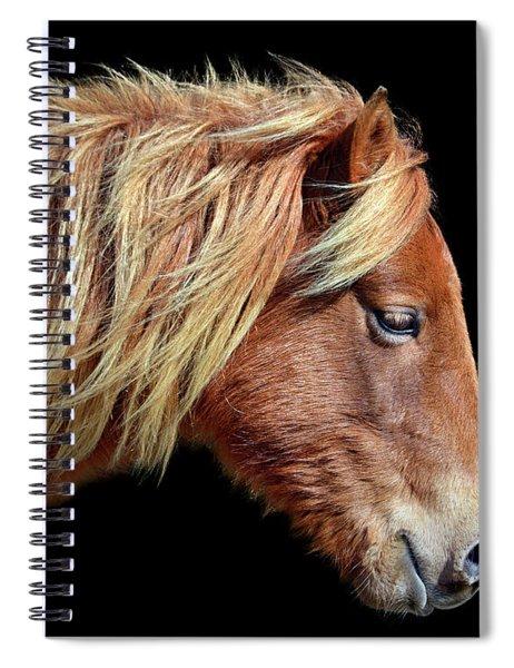 Assateague Pony Sarah's Sweet Tea Portrait On Black Spiral Notebook