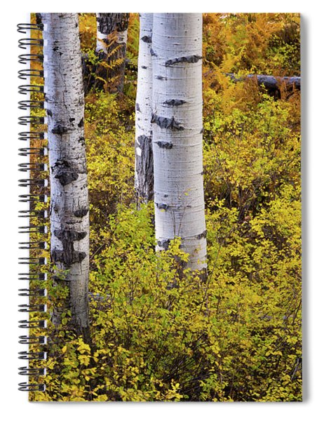 Spiral Notebook featuring the photograph Autumn Contrasts by John De Bord