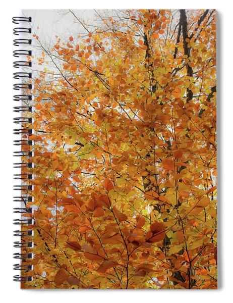 Autumn Explosion 1 Spiral Notebook