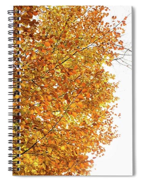 Autumn Explosion 2 Spiral Notebook
