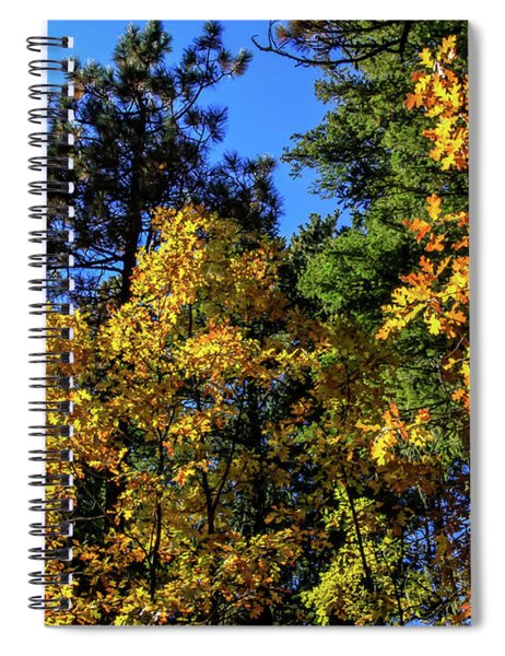 Autumn In Apache Sitgreaves National Forest, Arizona Spiral Notebook