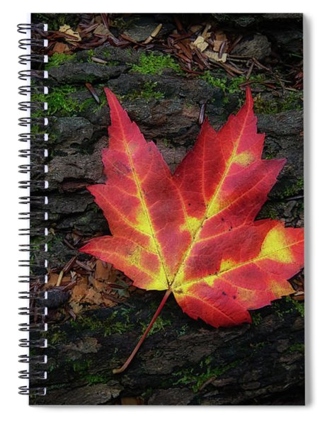 Spiral Notebook featuring the photograph Autumn Leaf by Heather Kenward