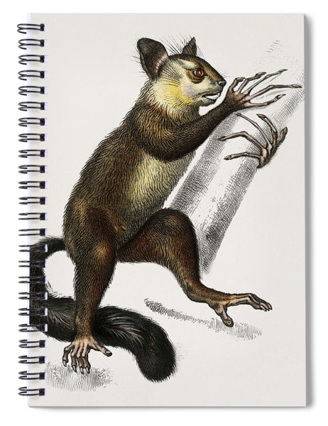 Aye-aye  Cheiromys Madagascariensis  Illustrated By Charles Dessalines D' Orbigny  1806-1876  Spiral Notebook