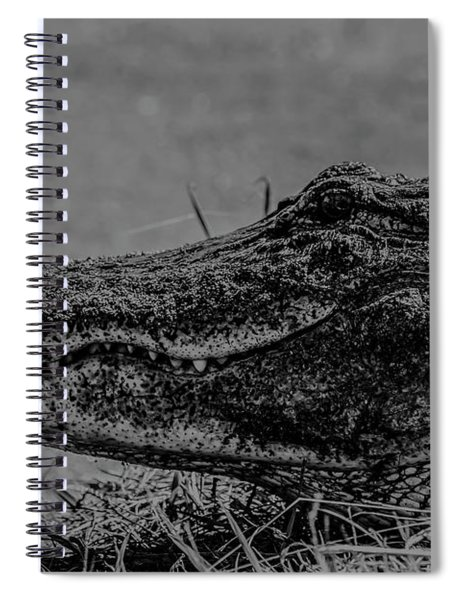 B And W Gator Spiral Notebook