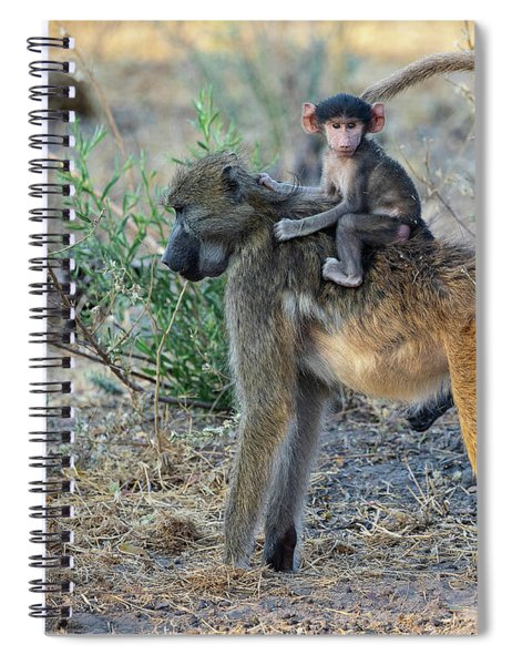 Baboon And Baby Spiral Notebook