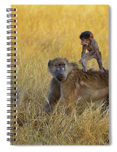 Baboons In Botswana Spiral Notebook