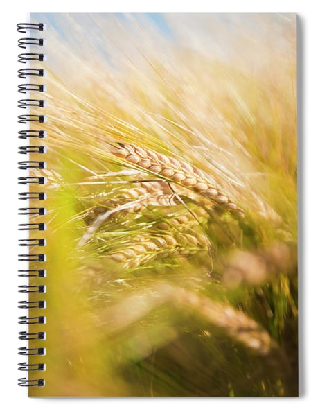 Background Of Ears Of Wheat In A Sunny Field. Spiral Notebook