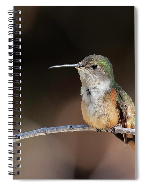 Bahama Woodstar Spiral Notebook