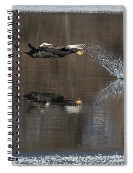 Bald Eagle 2018-13 Spiral Notebook