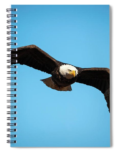 Bald Eagle In Flight  Spiral Notebook