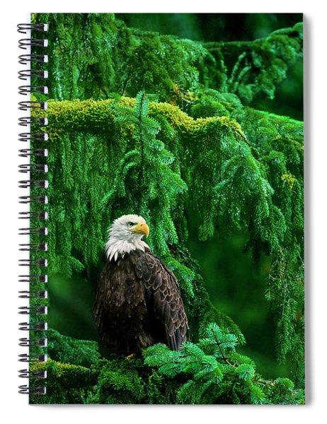 Bald Eagle In Temperate Rainforest Alaska Endangered Species Spiral Notebook