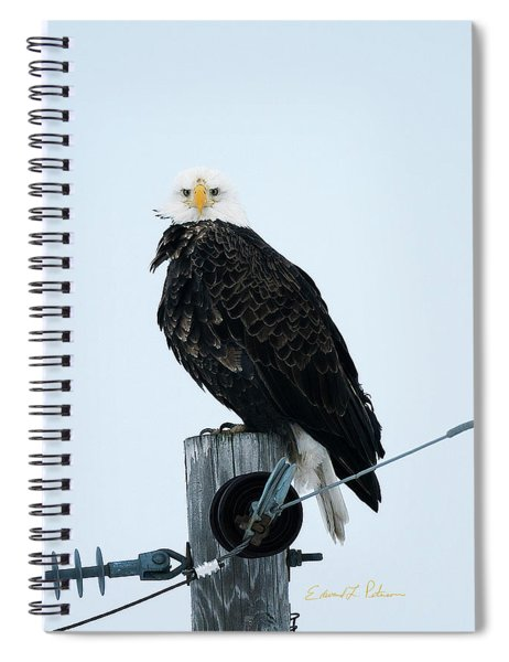 Bald Eagle Watching Me Spiral Notebook by Edward Peterson