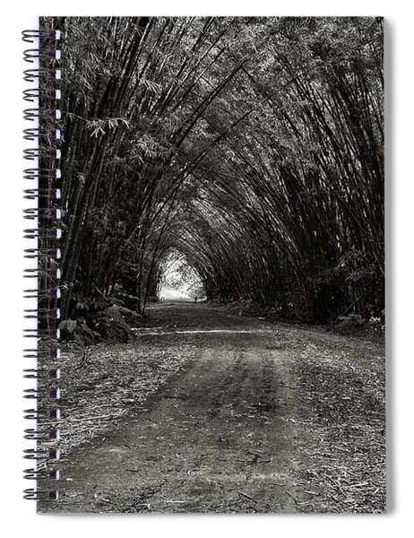 Bamboo Cathedral I Spiral Notebook