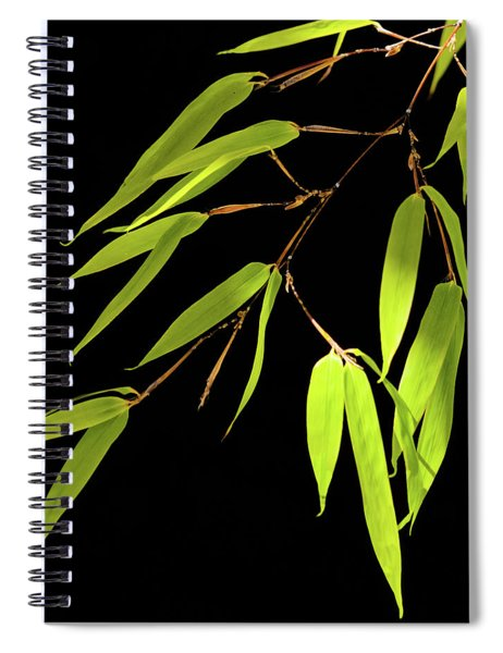 Bamboo Leaves 0580a Spiral Notebook