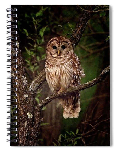 Barred Owl At Dusk Spiral Notebook