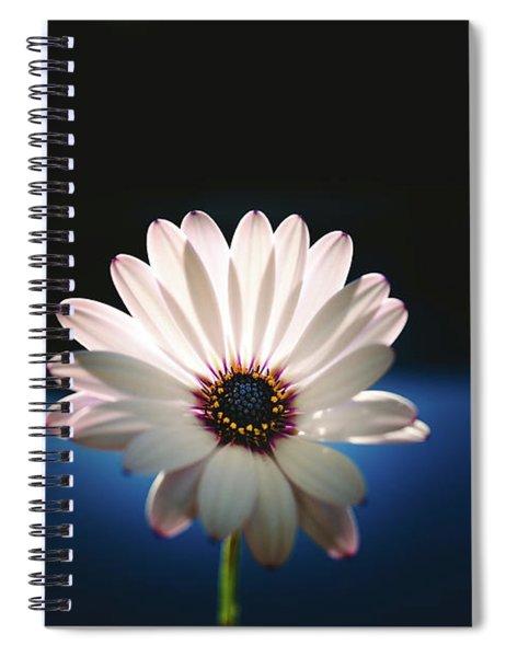 Beautiful And Delicate White Female Flower Dark Background Illum Spiral Notebook