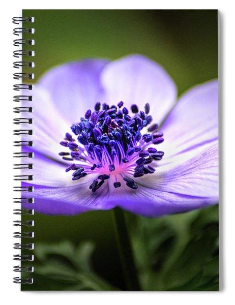 Beautiful Anemone Spiral Notebook