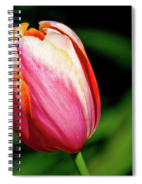 Beauty In Red Spiral Notebook