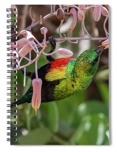 Beautiful Sunbird Spiral Notebook