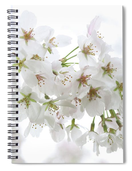 Beautiful White Cherry Blossoms Spiral Notebook