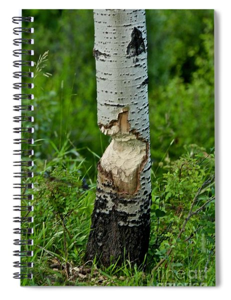 Beaver Work Spiral Notebook