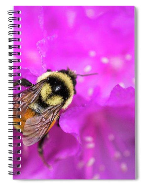 Bee On Azalea Spiral Notebook