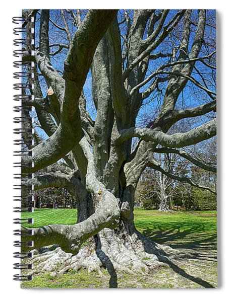 Beech Tree At The Breakers Spiral Notebook