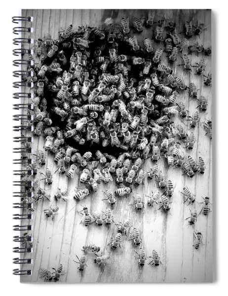 Bees Spiral Notebook