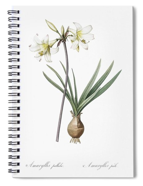 Belladonna Lily Illustration From Les Liliacees  1805  By Pierre Joseph Redoute  1759 1840  Spiral Notebook