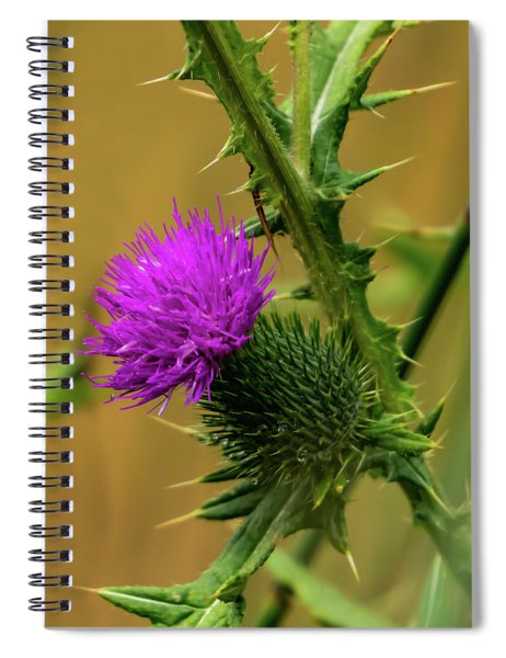 Between The Flower And The Thorn Spiral Notebook